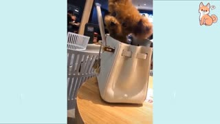 Cute Funny Puppies Compilations