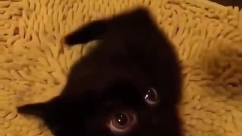 Girlfriend surprised with her little pet