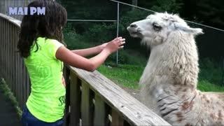 funny animals Dinesh D'Souza, BonginoReport, The Dan Bongino Show, One America News Network