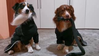 Doggo Blows Wind on Brother