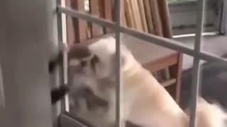 Funny Animals Fails Compilation