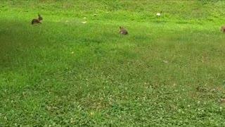 Rabbits Professional Soccer Team
