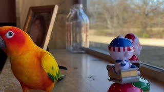 Parrot dances with bobble head buddies while eating banana