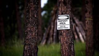I Found Bigfoot