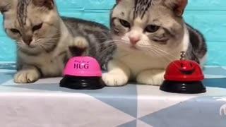 CAT FUNNY VIDEO I FUNNY VIDEO CAT I CAT FUNNY VIDEO I FUNNY VIDEO