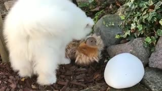 Cute puppy vs sloth