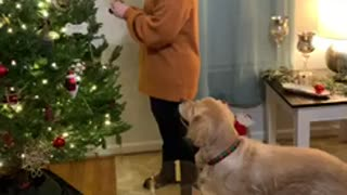 Doggo Helps Decorate
