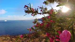 Beautiful natural video sweet nature
