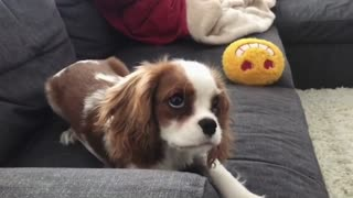 How to throw a puppy temper tantrum
