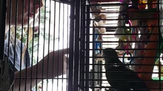 Quaker parrot argues with teenager