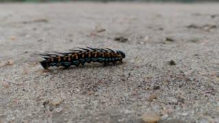 Caterpillar dancing