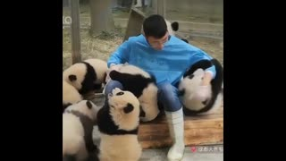 cutest animals of the moment video