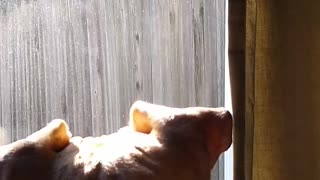 Squirrel Tease