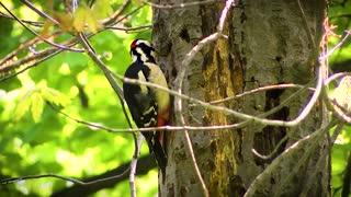 beautiful birds singing (16)