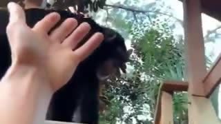My best friend is a monkey