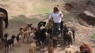 The Barnyard Bhutan Animal Rescue & Sanctuary