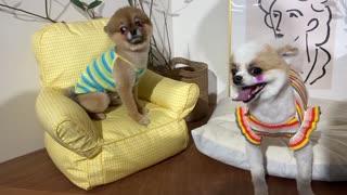 Korean puppies taking pictures