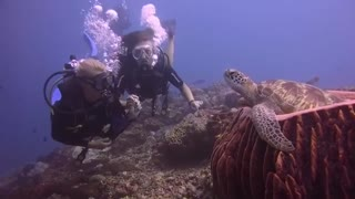 Underwater Close Encounter with a Sea Turtle