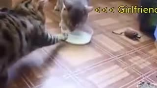 Funny cats Before and After marriage
