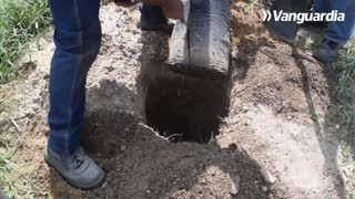 Así se trabaja para plantar 18 mil árboles en Bucaramanga y el área