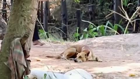 Troll Prank Dog Funny & fake Lion and Fake Tiger Prank To dog ,Huge Box Prank to HIGH