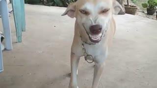 Dog smile funny Sandy smile