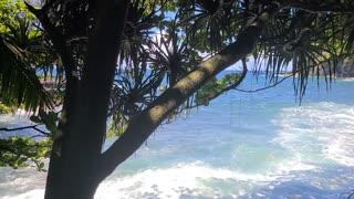 Ocean Side In The Jungle
