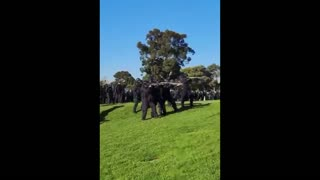 Australian Police Fire Rubber Bullets At People Leaving Protest Site