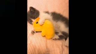 Cute Cats being played by their toys