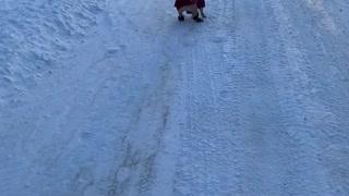 Goofy French Bulldog Loves Her Snow Rolls