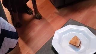 Xena impulse control training with a hamburger