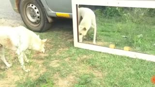 Prank Dog Hilarious Funny Reaction