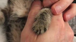 Sassy the rescue kitten