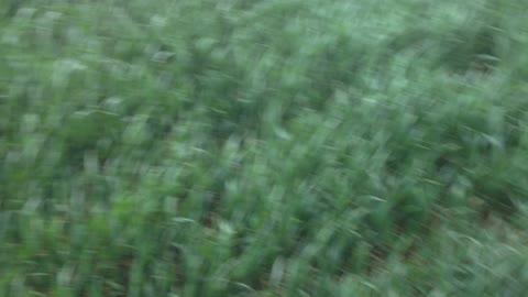 Nothing feels as good as running in grass