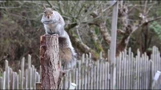 Relaxing animal video