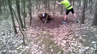 Amazing animal rescues