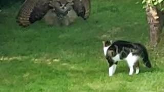 Owl Intimidates Cat With Impressive Display