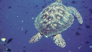 Beautiful Turtle Up Close
