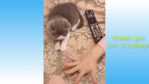 Cute Pets And Funny Animals compilation v