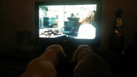 """Pair of Golden Retrievers can't stop watching """"Marley & Me"""""""
