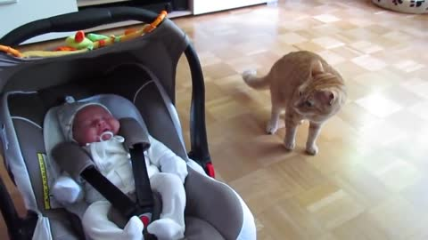 CATS Meeting New Born Babies for the FIRST Time [NEW] Compilation