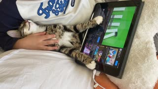 Sultan the cat sleeps with tablet