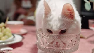A cute cat licking a crystal glass with style