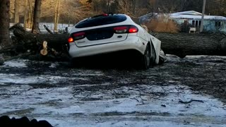 Car Pulverized by Falling Tree