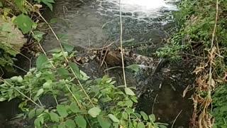 Croix creek