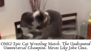 Omg! Epic Cat Wrestling Match.