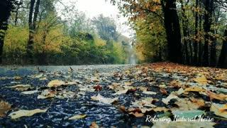Relaxing rainfall ambient natural atmosphere sound-Rainin HD, sleeps,spa,meditation, readingbook
