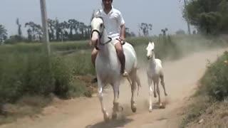Exquisite horse riding
