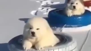 Little adorable dog enjoying their ice skating