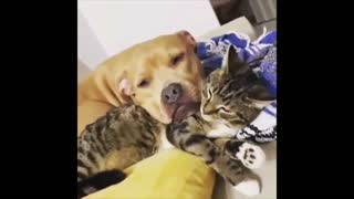 moments for two between animals